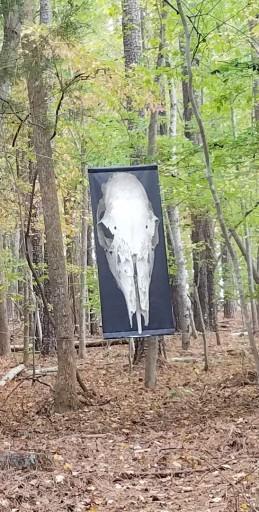 tour skull